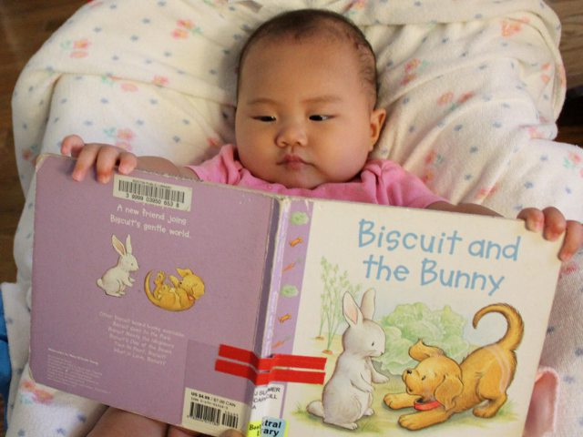 Biscuit and the Bunny by Alyssa Satin Capucilli