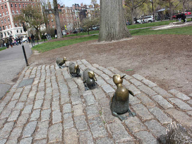 Make Way For Baby On Ducklings - Line of Ducklings